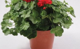 ClassicFlowerPots-Product-2