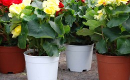ClassicFlowerPots-Product-3