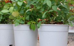 ClassicFlowerPots-Product-4