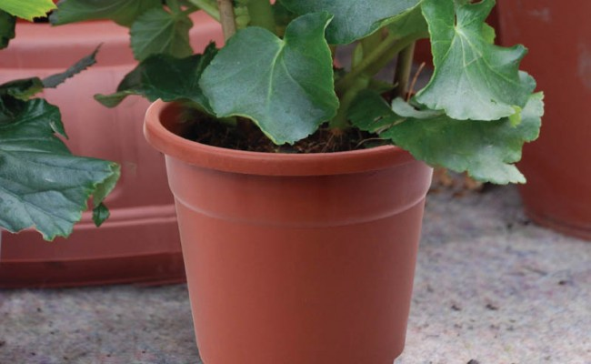 ContainerFlowerPot-Product-1