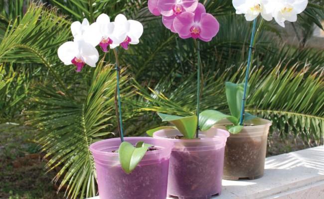OrchidPots-Product-1