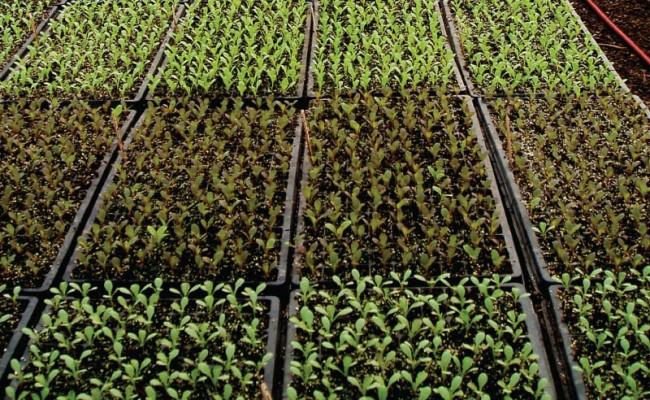 SeedlingPlantationTrays-Product-1